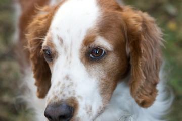 Pet Friendly Prismatic Photography