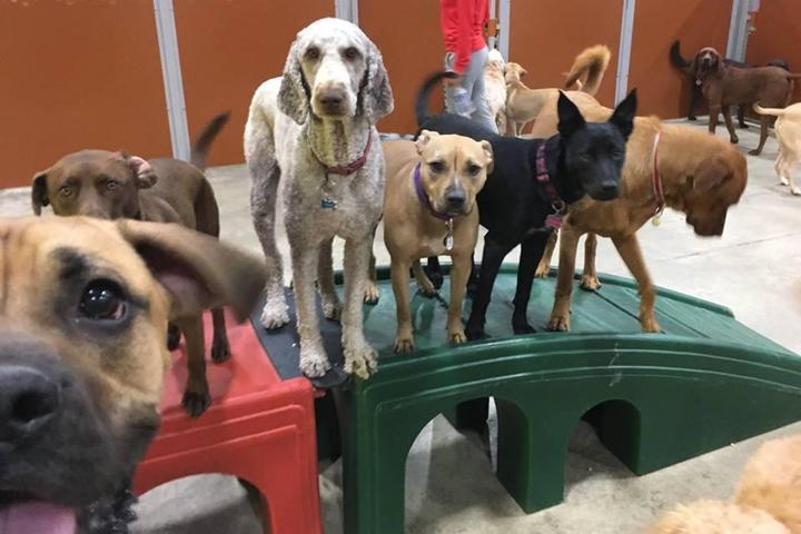 Pet Friendly Camp Bow Wow Eatontown