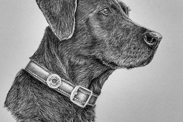 Pet Friendly Art by Debbie Pet Portraits in Pencil