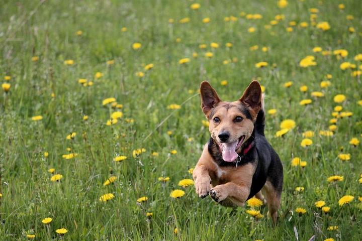 Pet Friendly Marin & Sonoma Pet Waste Removal Service