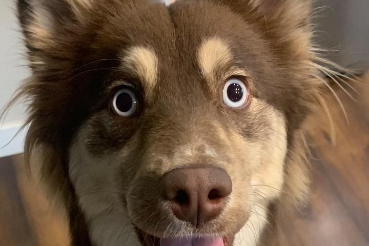 Pet Friendly Puppy Pooper Pick Up