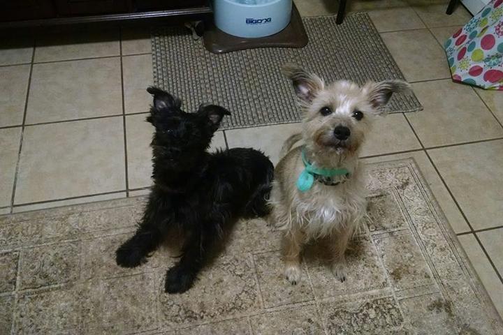 Pet Friendly Pawsibilities Pet Services