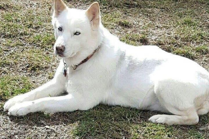 Pet Friendly Northern Exposure Siberian Husky Rescue Inc.