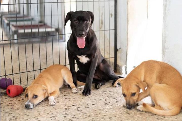 Pet Friendly The Sato Project
