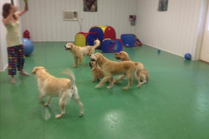Pet Friendly Club Canine Pet Resort