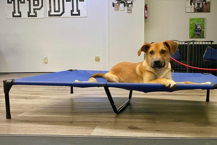 Pet Friendly Turning Point Dog Training