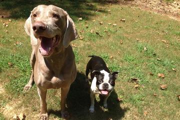 Pet Friendly Buckhead Pet Pals