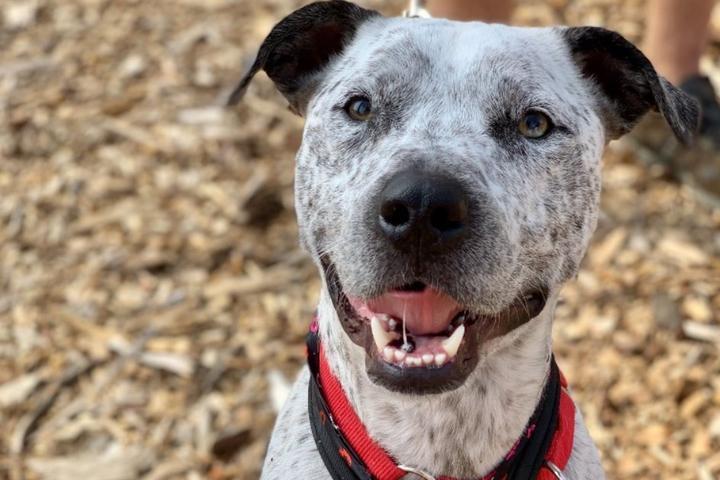 Pet Friendly Dog Star Rescue