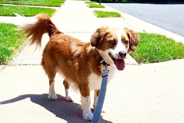 Pet Friendly Fairfax Pet Care