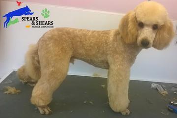 Pet Friendly Spears & Shears Mobile Pet Grooming