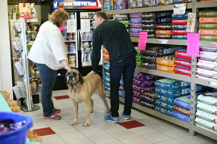 Pet Friendly Nashville Pet Products