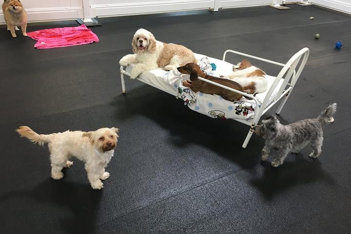 Pet Friendly Orrville Pet Spa & Resort