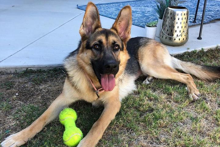 Pet Friendly Animal Rescue & K9 Charities