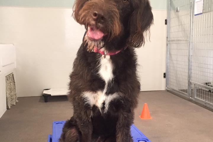 Pet Friendly Golden View Dog Training, LLC