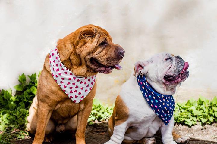 Pet Friendly Trish Hampton Pet Store