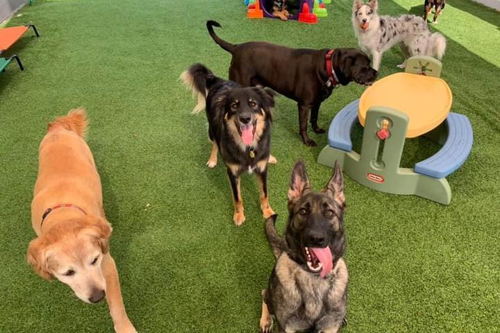 Pet Friendly Bark! Pet Resort