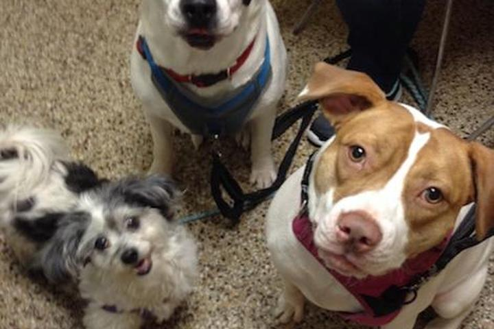 Pet Friendly Cranston Animal Hospital