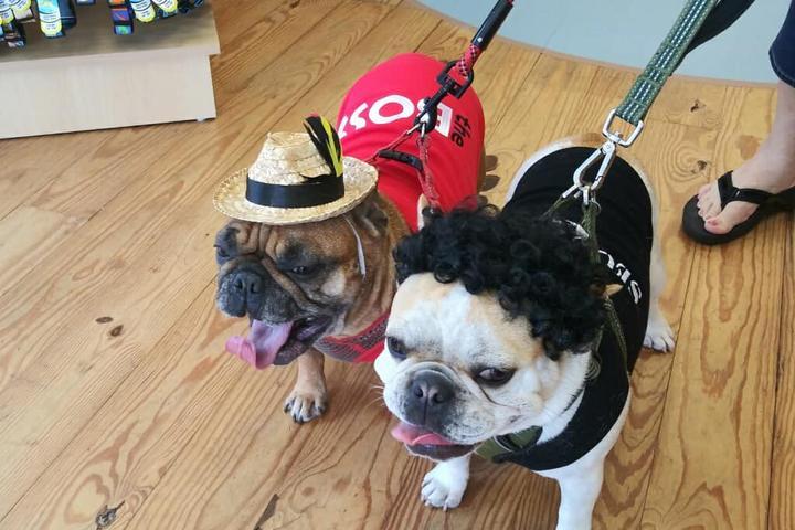 Pet Friendly Faux Paws Dog Shoppe®
