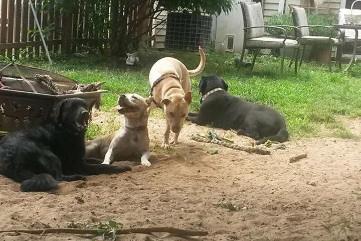 Pet Friendly Tabitha's Pet Care Services