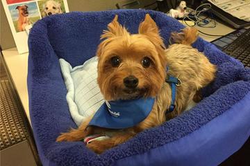 Pet Friendly Nationwide Insurance