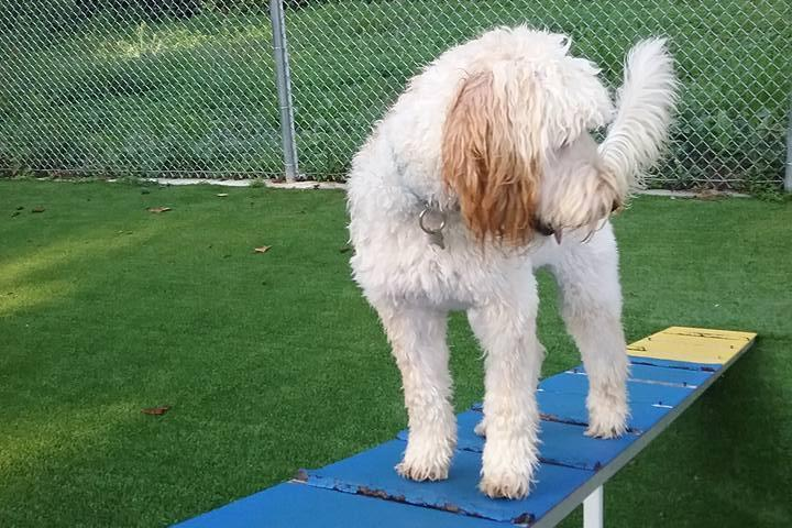 Pet Friendly Top Dog Training and Resort