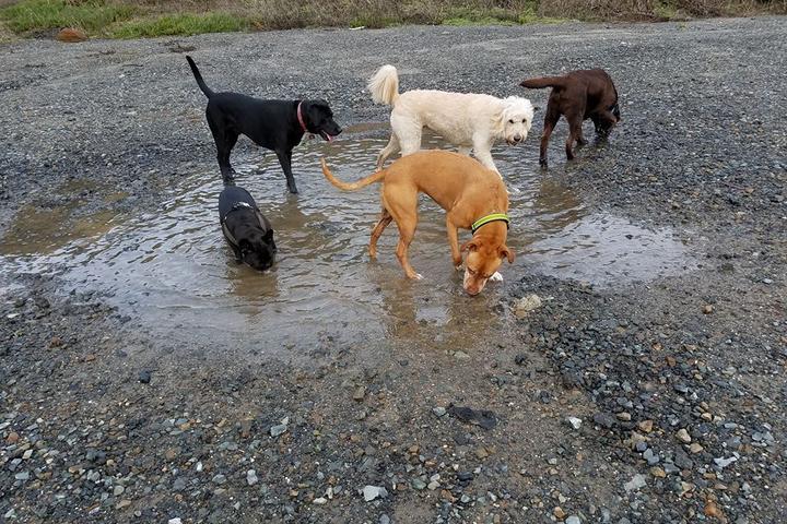Pet Friendly Lucky Pawz Pet Services