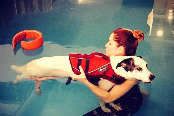 Pet Friendly The Dog Dive