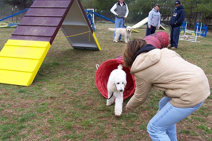 Pet Friendly Atlanta Dog Agility