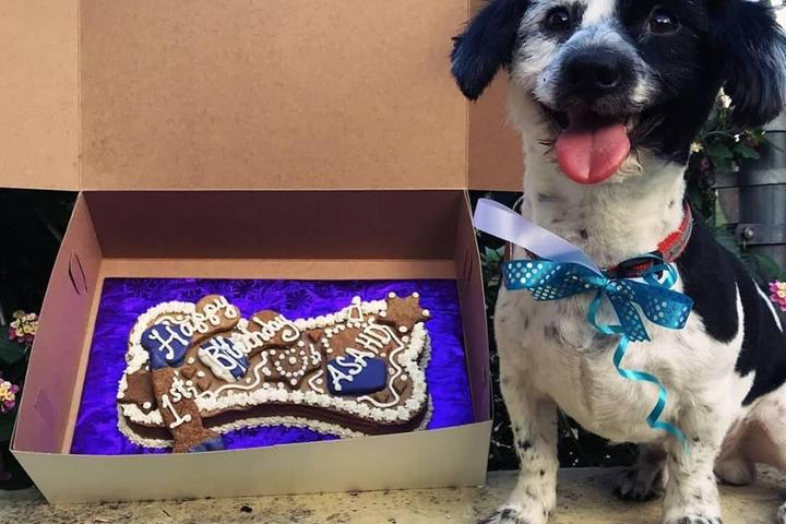 Pet Friendly Pookie's Pet Nutrition & Bow Wow Bakery