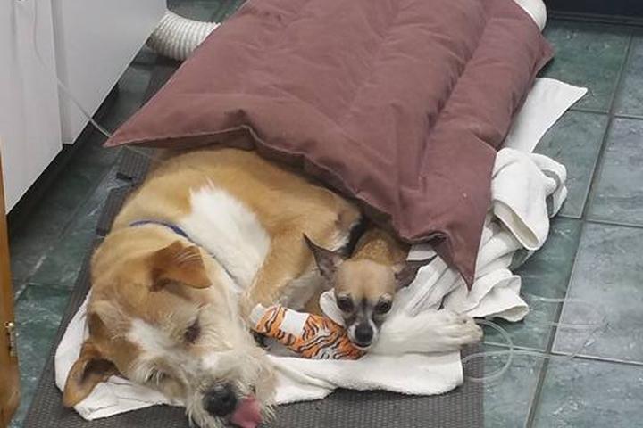 Pet Friendly Meadowlawn Animal Services - Loris
