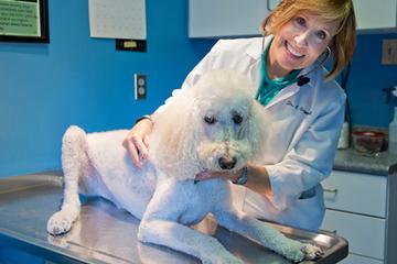 Pet Friendly Locke A. Taylor Veterinary Hospital