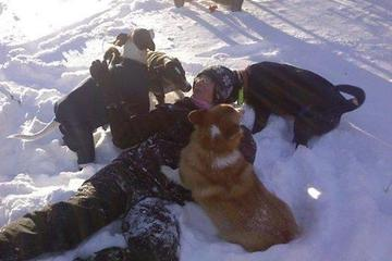 Pet Friendly Doggie Daytrippers