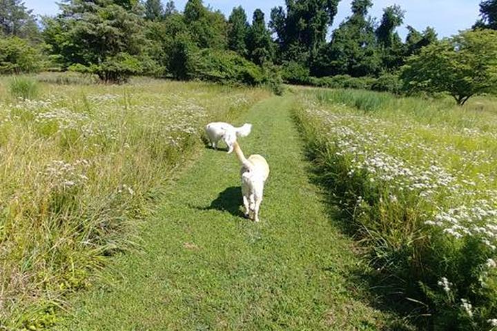 Pet Friendly WalkTime For Pets