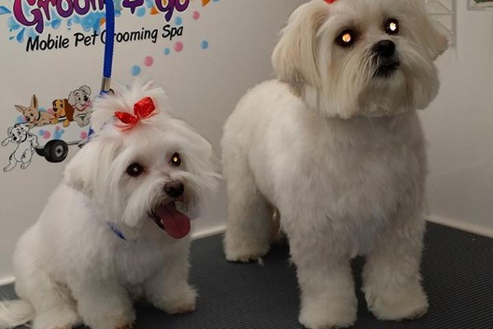 Pet Friendly Groom & Go Pet Grooming Spa