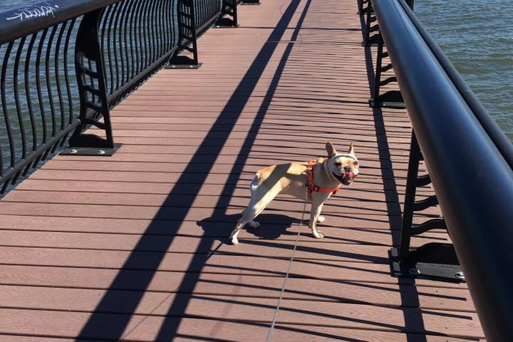 Pet Friendly The Kearny Dog Walker