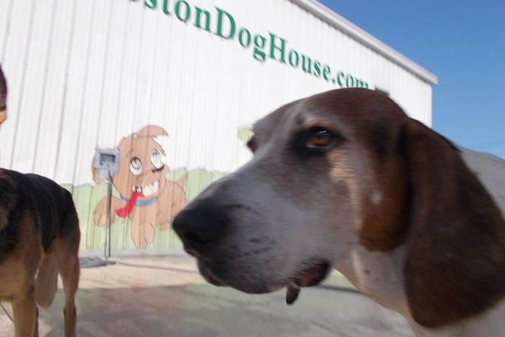 Pet Friendly Charleston Dog House