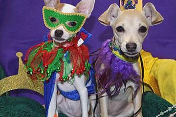 Pet Friendly NOLA Animal Clinic