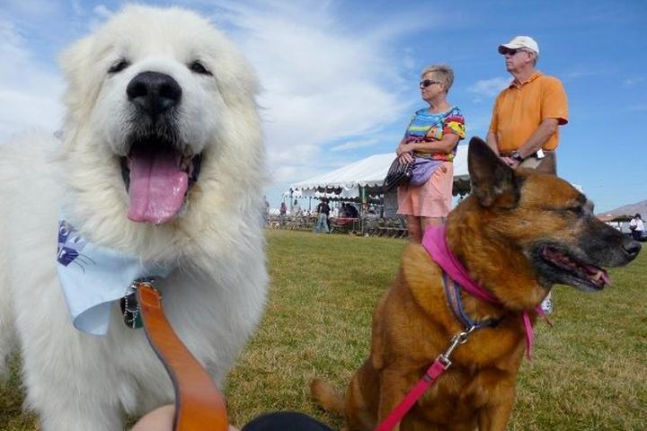 Pet Friendly CJ's Canines L.L.C