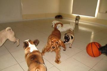 Pet Friendly Woof! Professional Dog Groomers