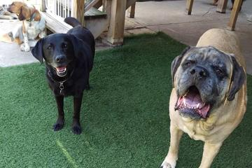 Pet Friendly Cruisin' Canines