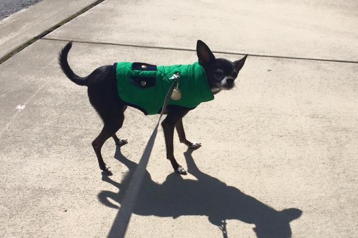 Pet Friendly Peak City Puppy