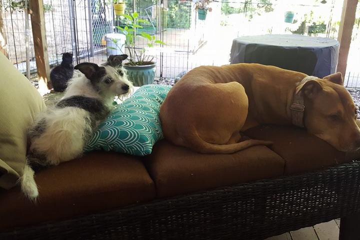 Pet Friendly No Worries 4 Pets