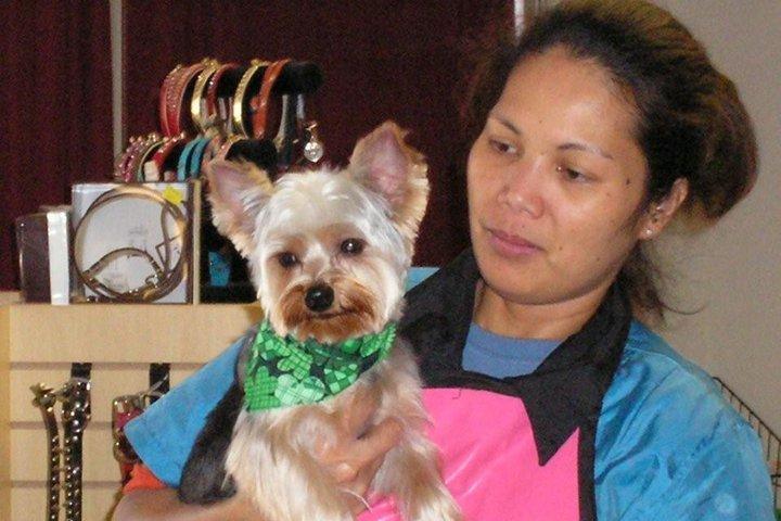 Pet Friendly Glamour Dogs Salon