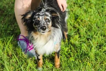 Pet Friendly Chisholm Trail Veterinary Clinic of Luling