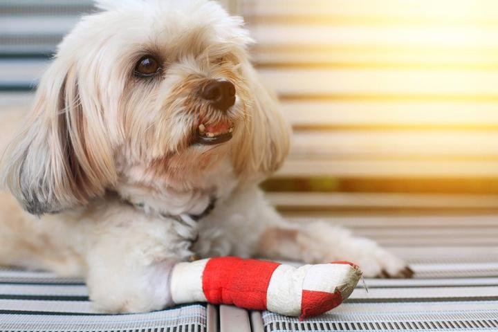 Pet Friendly Sierra Veterinary Specialists & Emergency Center