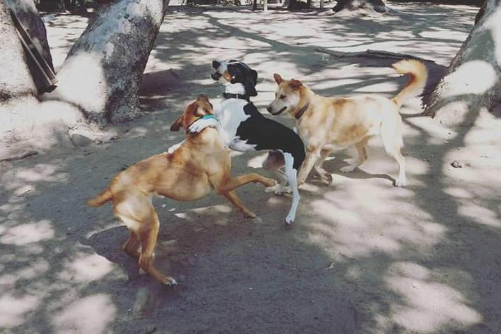 Pet Friendly Tale of the Dog Boarding and Daycare