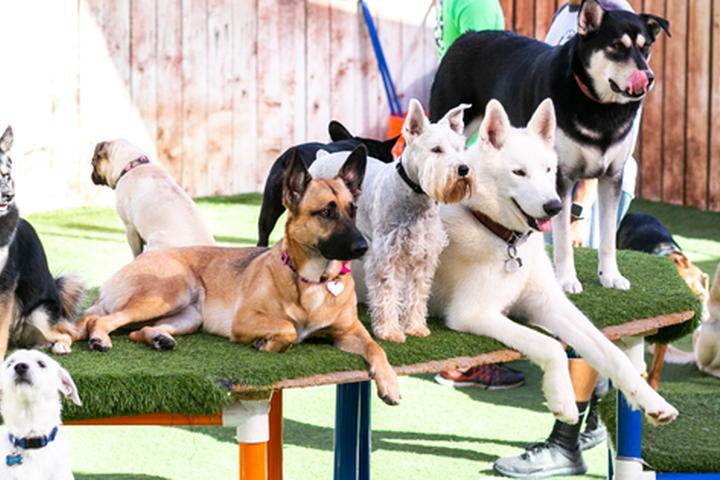 Pet Friendly Camp Run-A-Mutt Chula Vista