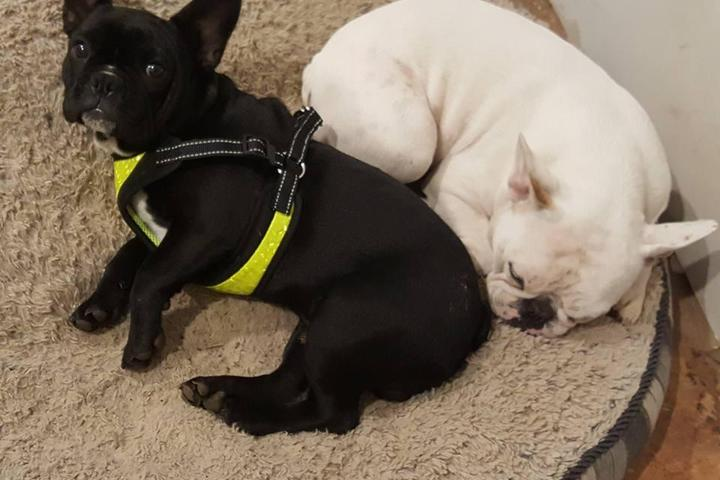 Pet Friendly Puptown Resort Pet Care