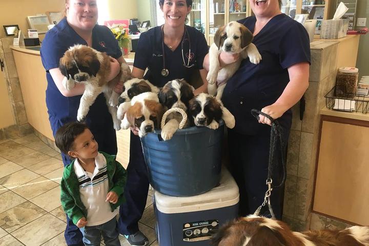 Pet Friendly Bear Valley Veterinary Care Center