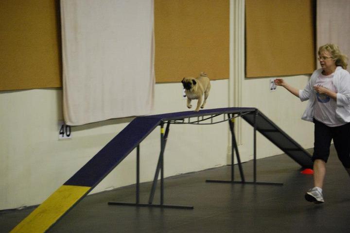 Pet Friendly Four Paw Sports Center